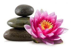 Lotus Flower, New Beginnings and Acupuncture
